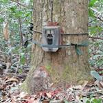 Mammal Survey of Phnom Tbeng Natural Heritage Park