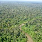 Cambodia's Keo Seima Wildlife Sanctuary Sells First Carbon Credits