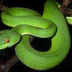 New snake discovered in Seima Protection Forest