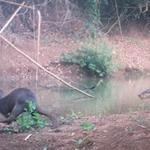 Otters of Seima surveyed for the first time