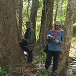 Forest and field mapping in the Seima Protection Forest