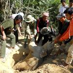 A young Asian Elephant found dead inside Keo Seima Wildlife Sanctuary